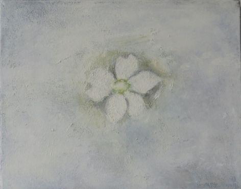 white anemone, 1999