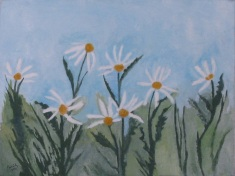 daisies, 2011